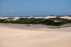 Vegetation growing in the sand at the Alexandria coastal dune fields near Addo / Colchester on the Sunshine Coast in South Africa. The Alexandria coastal dune stock photography
