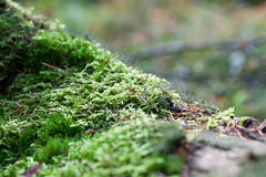 Vegetation growing on an tree trunk Stock Photography