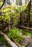 Vegetation in Hawaii. A view of the lush vegetation in Hawaii Stock Photos