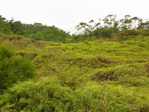 Vegetation on a hill Royalty Free Stock Photography