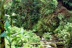 Vegetation i Cotacachi Cayapas den ekologiska reserven Royaltyfri Foto