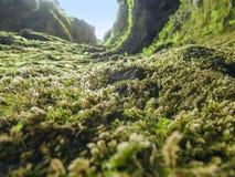 Vegetation i Island Royaltyfri Foto