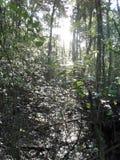 Vegetation i skog arkivbilder