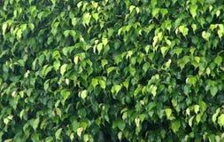 Vegetation I Royalty Free Stock Photography