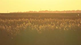 Vegetation i strålarna av höstsolen arkivfilmer