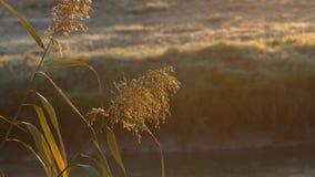 Vegetation i strålarna av höstsolen lager videofilmer