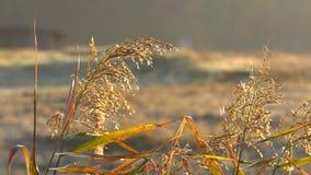 Vegetation i strålarna av höstsolen stock video