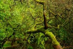 Vegetation i vår Royaltyfria Bilder
