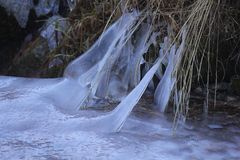Vegetation with ice in mountain. The vegetation with ice in mountain Royalty Free Stock Photo