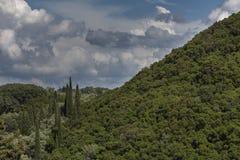 Vegetation on the island of Corfu, Greece Stock Photos