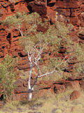Vegetation in Karijini National Park Royalty Free Stock Image