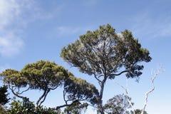 Vegetation at  Kinabalu national park. Kota kinabalu - Malasia. Stock Photos