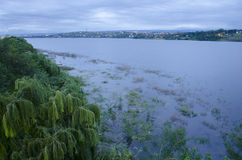 Vegetation and lake Stock Image