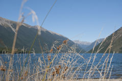Gras at Lake Rotoiti with mountain view. Vegetation at Lake Rotoiti in the Nelson Lakes District, South Island, New Zealand Stock Images