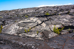 Vegetation on the lava flow in Kaimu, Hawaii Royalty Free Stock Photography