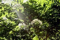 Vegetation, Leaf, Flora, Nature Reserve stock images