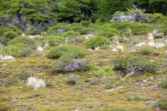 Vegetation at the Los Glaciares National Park, Argentina. Vegetation along the trail to Cerro Fitz Roy at the Los Glaciares National Park, Argentina. The park Royalty Free Stock Photo