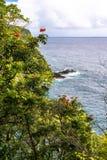 Vegetation on the Maui coast, Hawaii Stock Image
