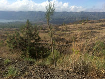 Vegetation on Mount Batur, Bali Royalty Free Stock Images