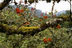 Vegetation in Mountain Rainforest Royalty Free Stock Photos