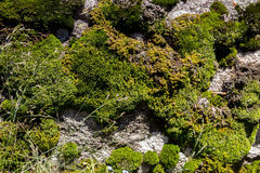 Vegetation in the mountains. Vegetation in the Trans-Ili Alatau mountains altitude of 2500 m Stock Image