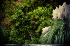 Vegetation nahe dem Brunnen Stockbild