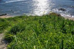 Vegetation nahe dem Ozean Lizenzfreies Stockfoto