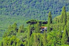 Vegetation, Nature, Ecosystem, Tree royalty free stock images