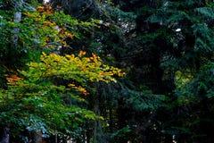 Vegetation, Nature, Leaf, Ecosystem royalty free stock photography