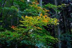 Vegetation, Nature, Leaf, Tree royalty free stock image