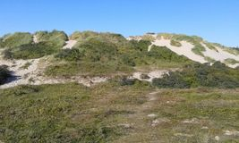Vegetation, Nature Reserve, Ecosystem, Shrubland royalty free stock photo