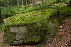 Vegetation, Nature Reserve, Moss, Rock royalty free stock photos