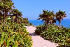 Vegetation near the sea Stock Photo