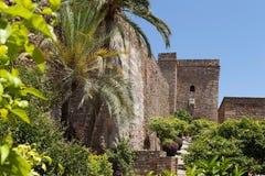 Vegetation near Zamka.Granada. Stock Image