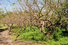 Vegetation in Nicaragua stock image