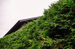 Vegetation in Oberstdorf, Deutschland Lizenzfreies Stockbild