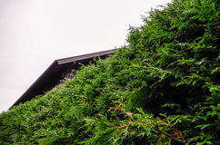 Vegetation in Oberstdorf, Germany Royalty Free Stock Image
