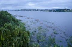 Vegetation och sjö Fotografering för Bildbyråer