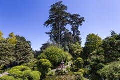 Vegetation och träd i en japanträdgård Royaltyfri Foto