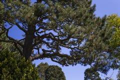 Vegetation och träd i en japanträdgård Arkivbild