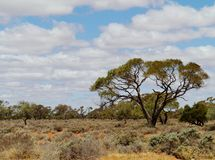 Vegetation in the outback of Australia Royalty Free Stock Photography