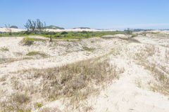 Vegetation over dunes  at Itapeva Park in Torres beach Stock Photo