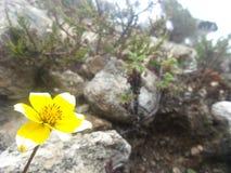 Vegetation på mer än 4000 meter Arkivbilder