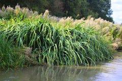Vegetation på sida av flodbanken arkivbilder