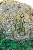 Vegetation på vaggar den Devetakskoy grottan, Bulgarien Arkivfoto