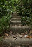 Vegetation, Path, Nature Reserve, Water royalty free stock photo
