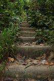 Vegetation, Path, Nature Reserve, Water