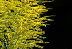 Vegetation, Plant, Tree, Larch