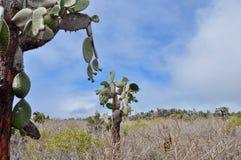 Vegetation, Plant, Tree, Sky Royalty Free Stock Photos
