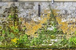 Vegetation on a quay wall stock photos